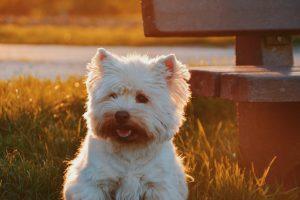 energetische behandeling, dieren, healing, balans, hond, paard, kat