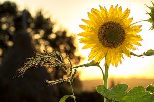 HSP tips, balans, groei, healing, vrouw, hooggevoelig welzijn Saskia Tiemens, holistisch praktijk
