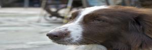 Balans, hond, kat, healing, welzijn voor dier & mens, Saskia Tiemens, energetische behandeling, energie, praktijk, holistisch, klachten, beter worden,