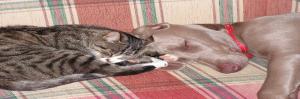 Balans, hond, kat, healing, welzijn voor dier & mens, Saskia Tiemens, energetische behandeling, energie, praktijk, holistisch, klachten, beter worden, fysiek, letsel,