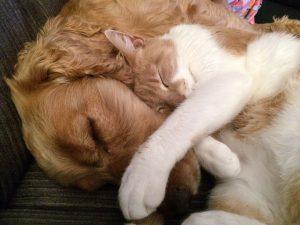 healing, energetische behandeling, welzijn voor dier en mens, saskia tiemens, energetisch therapeut, holistisch praktijk, heling, paard, hond, kat, hsp, hooggevoelig, sensitief, balans