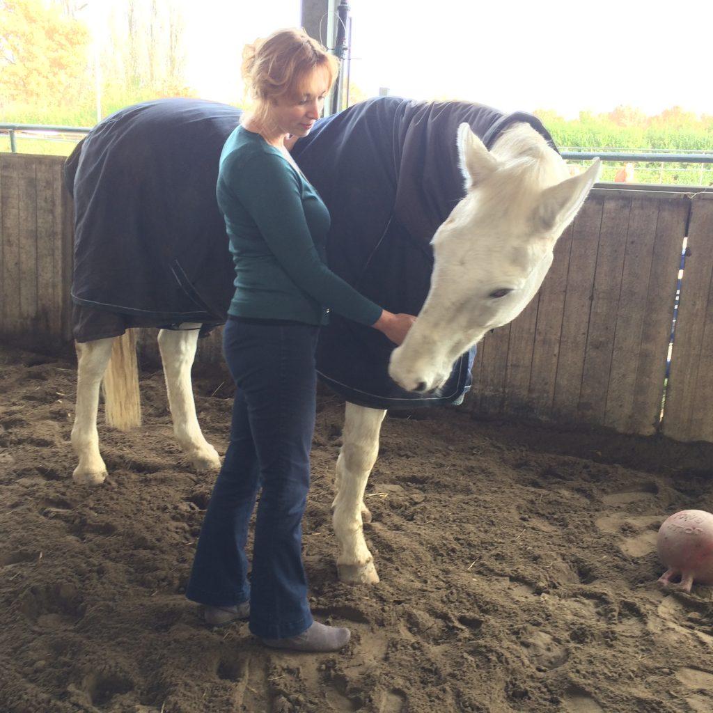 paard, dier, hond, kat, balans, energetisch therapeut, hsp, behandeling, energie, sensitief, welzijn voor Dier & Mens, holistisch praktijk, hooggevoelig,