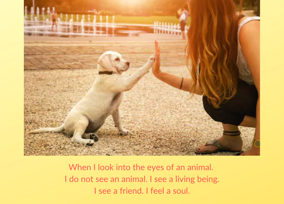 When I Look into the Eyes of an Animal..